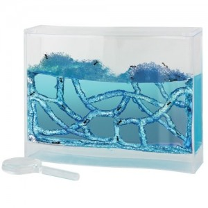 get-smart-ismanieji-zaislai-skruzdeliu-akvariumas-nr1