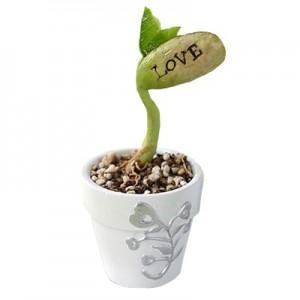 get-smart-love-augalas-nr1