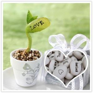 get-smart-love-augalas-nr2