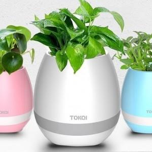 Get-Smart-ismanusis-augalas-kuris-dainuoja-bluetooth-kolonele-nr13